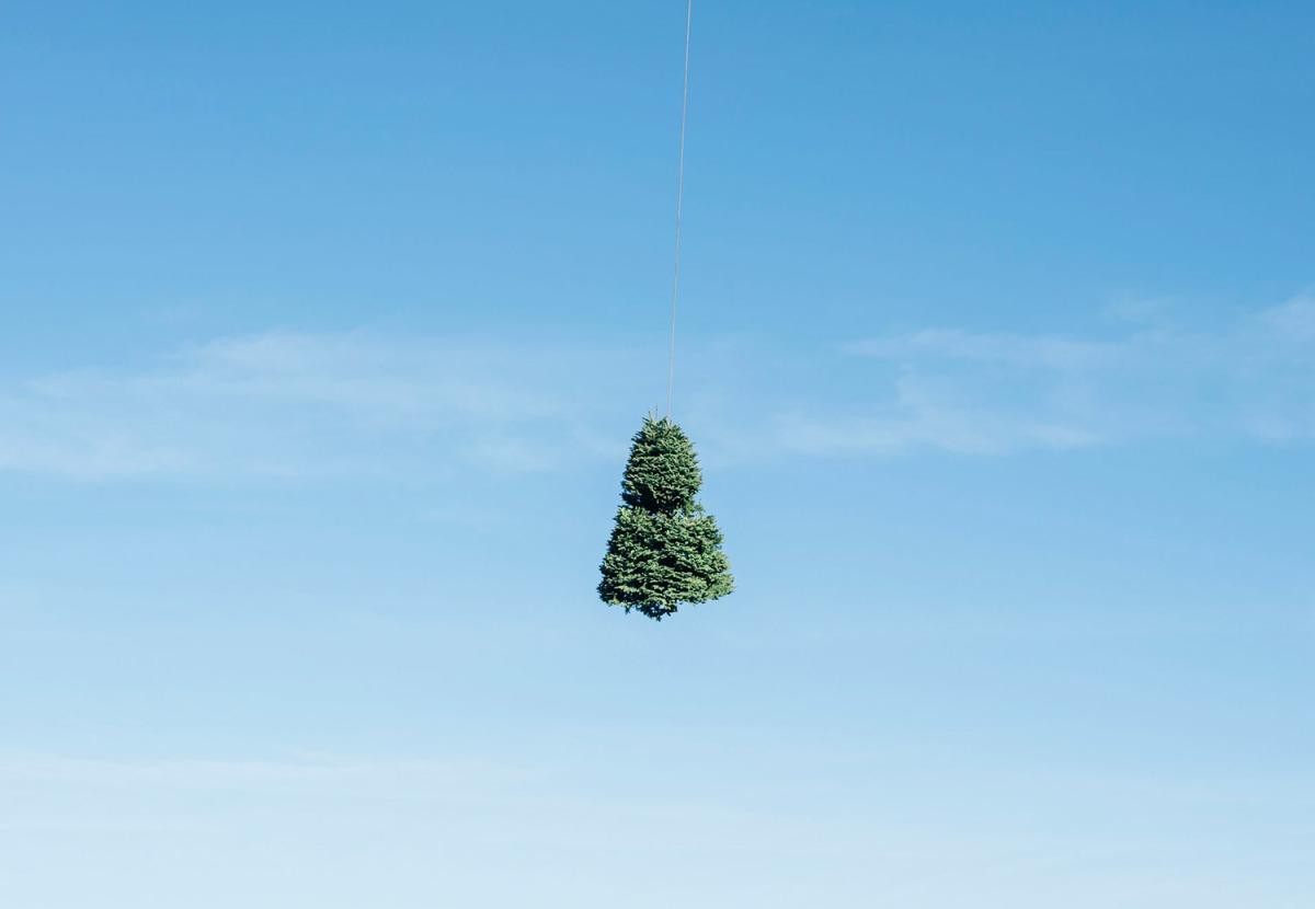 L'industria degli alberi di Natale, in Oregon